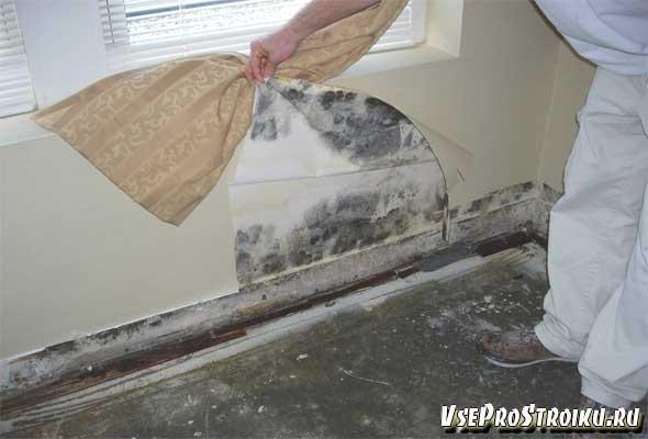 Как убрать грибок в комнате