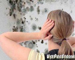 Как убрать плесень со стен