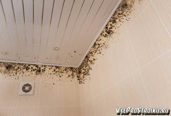 Плесень на стенах в ванной