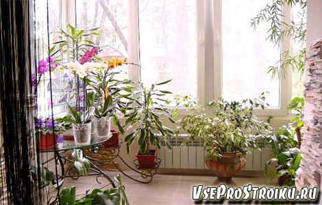 Растения в квартиры